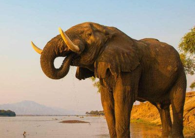 Zimbabwe Wildlife & Leisure Safari