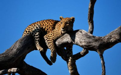 My 6 Favourite Wildlife Destinations in Southern Africa