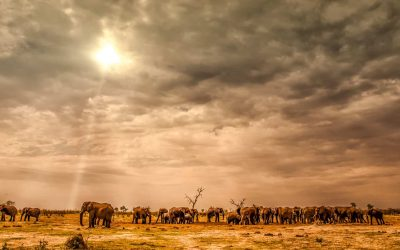 How to plan the perfect African safari