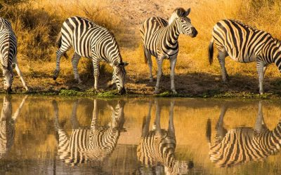 WIN a 10 day Kruger Safari
